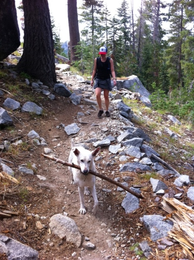 Dog and stick descending hiking trail