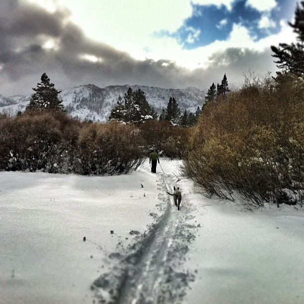 Xc skiing near Lake Tahoe