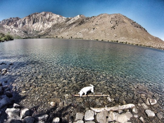 dog stick convict lake